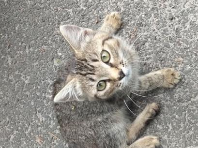 На Турійщині котеня шукає господаря