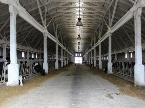 Фермерське господарство «Аміла» реконструює ферму у селі Радовичі
