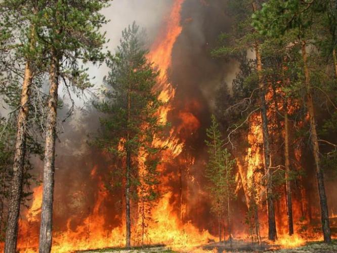 На Турійщині спостерігають нестабільну ситуацію, пов'язану з пожежною небезпекою