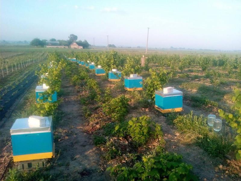 Фермер, через якого загинули сотні бджіл, не визнає своєї провини