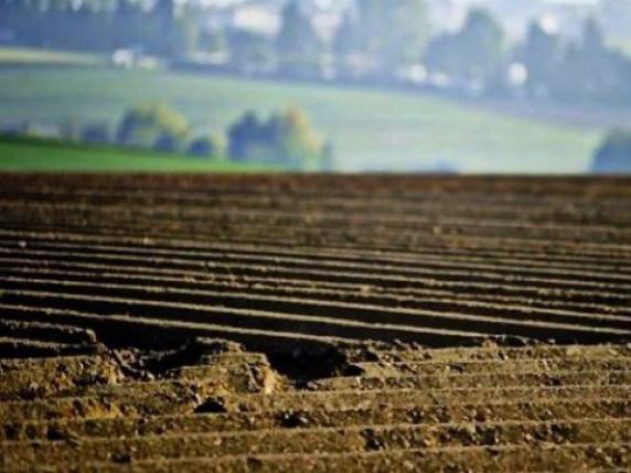 Турійська ОТГ отримала землі у комунальну власність