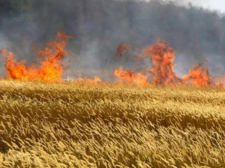 Пожежа під час жнив