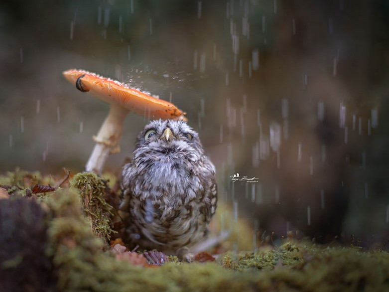 У Турійську буде дощ