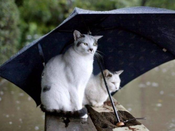 У Турійську можливий дощ