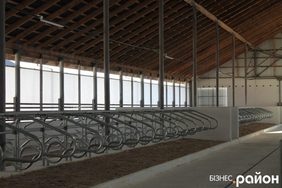 Як виглядає всередині сучасна молочна ферма