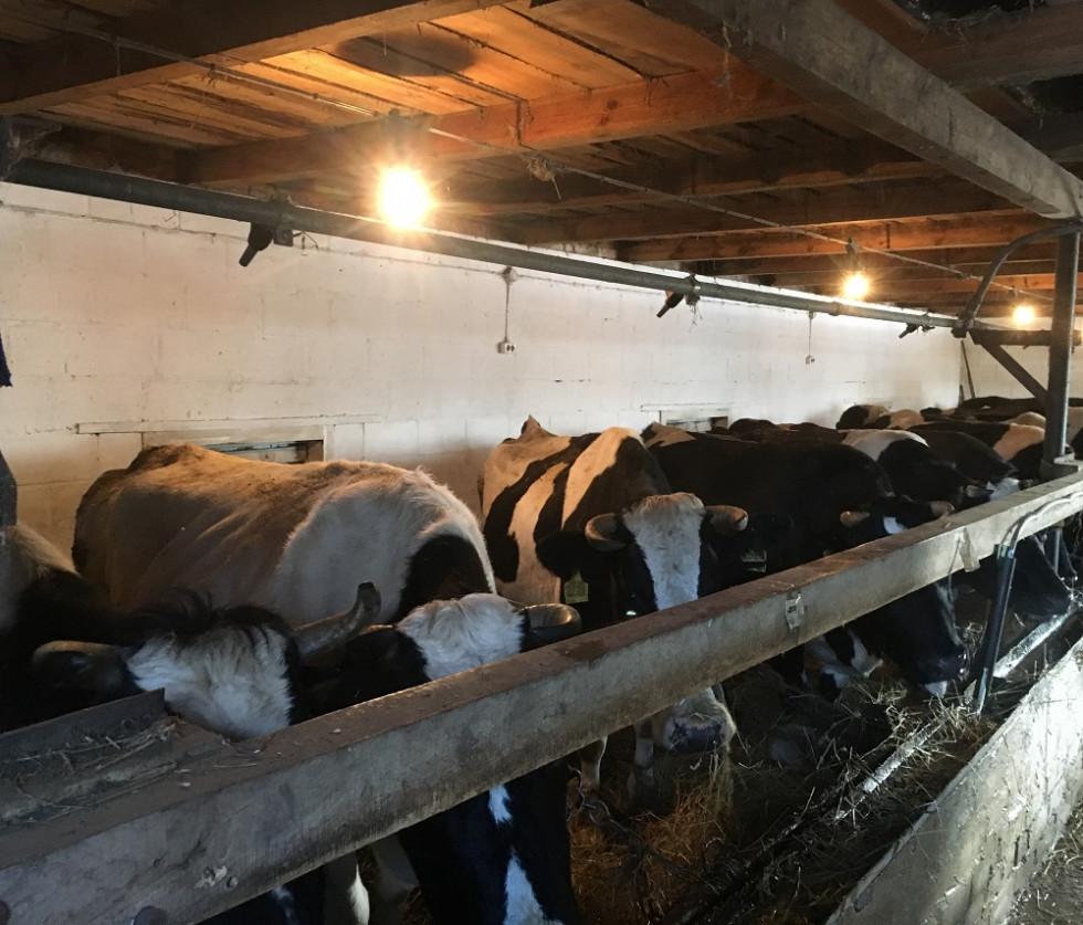 У 2009 році в господарстві Тамари Пилипівни утримувалась 1 корова, зараз їх 23.