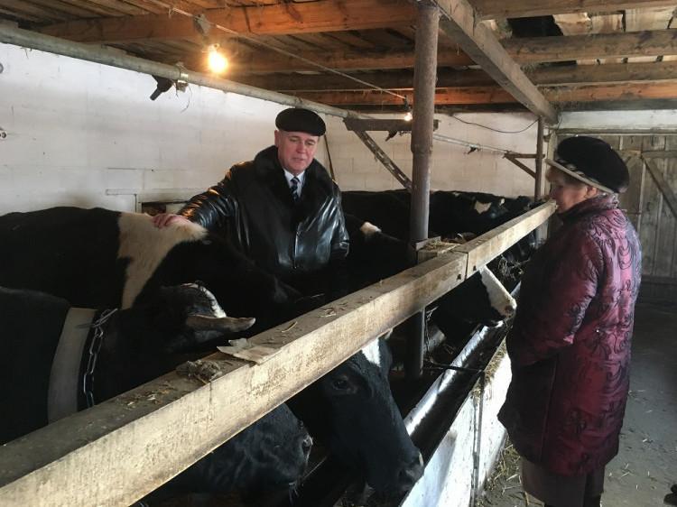 Дожва: корови Тамари Андрейчуук дають по 300 літр молока у день